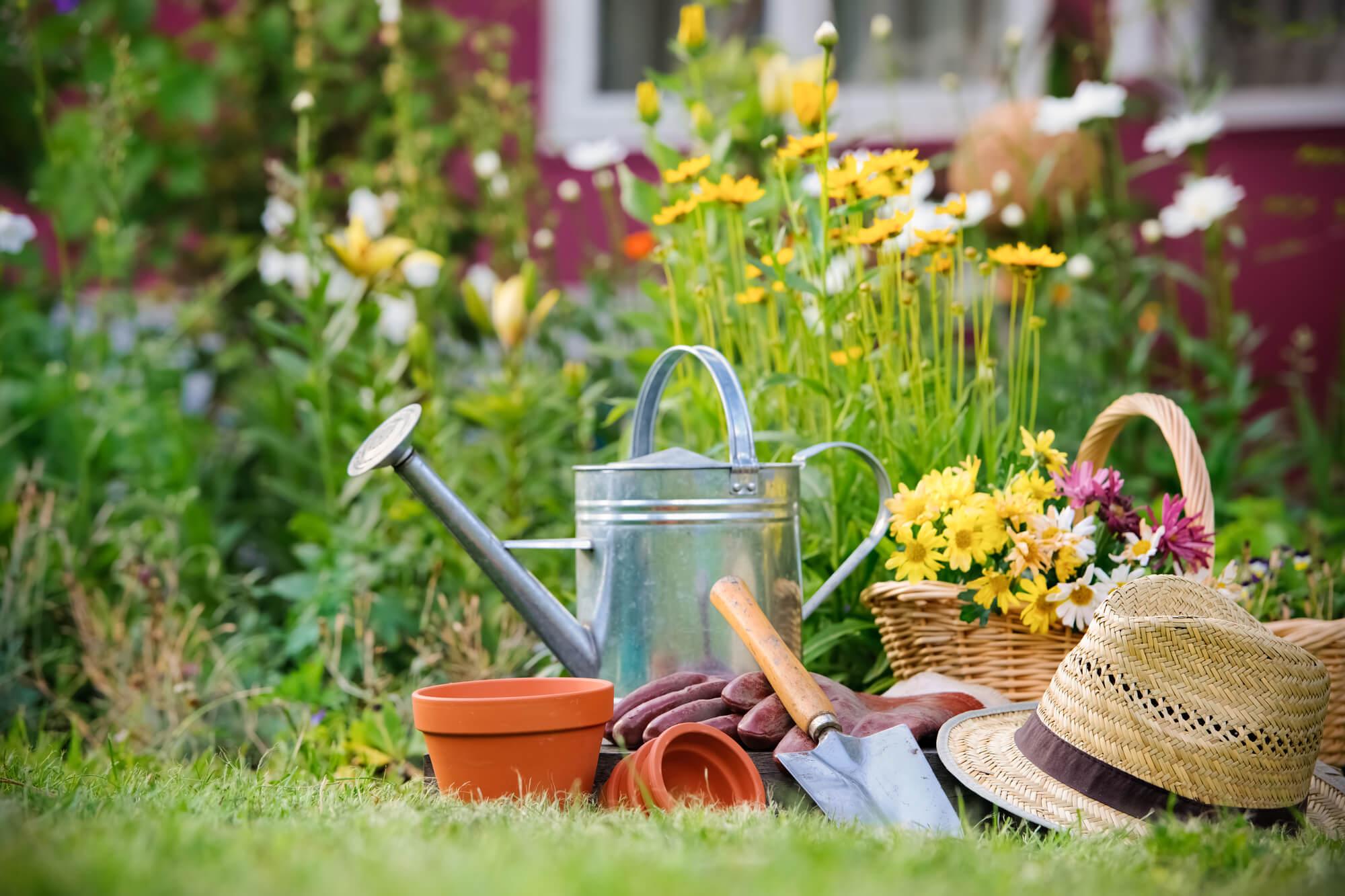 Uleiurile esențiale în grădină